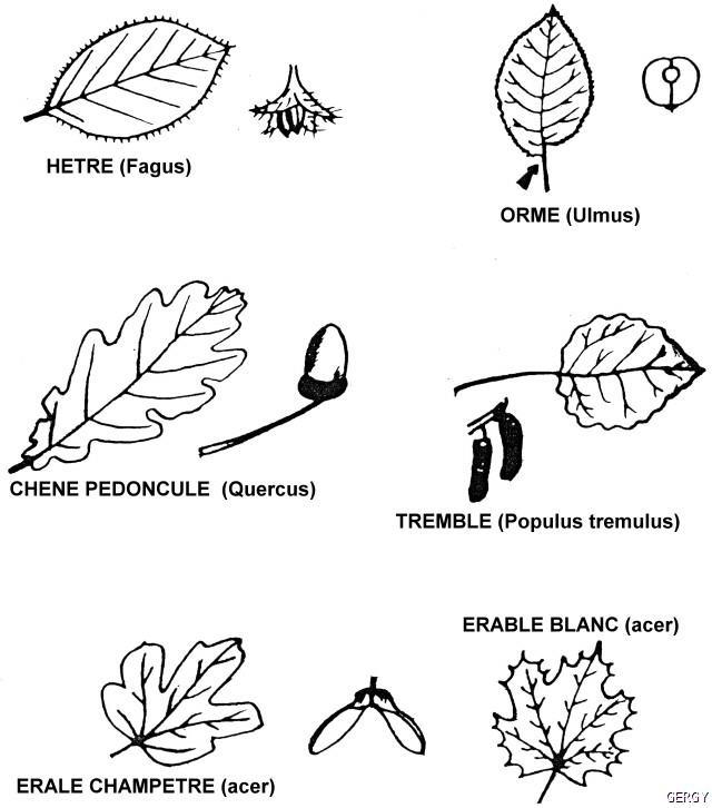 arbres5